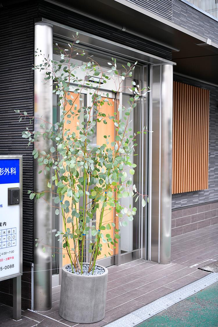 原田整形外科医院の入口
